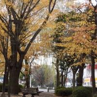 街中・公園風景から・・・いわき市平
