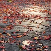 光と落ち葉と。