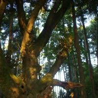 千葉県市原市、奈良の大仏です!!