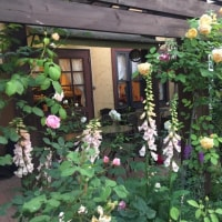 渡辺重信さん♪6月カフェライブ♪のご案内と薔薇のガーデン