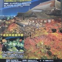ポスター0055 清水寺 夜間拝観  11月12日~12月4日