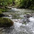 上桂川 久々の増水ながら