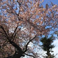春のリニューアル