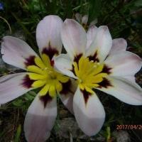 明るい庭の花たち(17-428)
