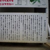 「伊江島・ヌチドウ宝館:魂を持つ言葉たちⅠ」No.1871