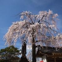 17年4/25~三岳地区~阿弥陀堂~花だより