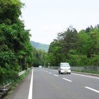 新緑(メタセコイヤと海津大崎)