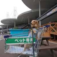 宇都宮から埼玉へ