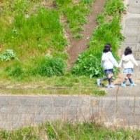 三ツ和公園へ桜見に