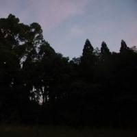 森の蛍を見ながら [森へ行く道<29>]