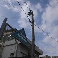 枯れもせず頑張ってるね♪沖縄の貸別荘