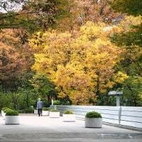 新宿西口公園の秋 6