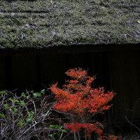 古民家前の紅葉