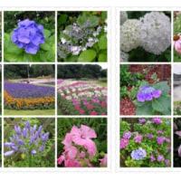 20090621花の美術館