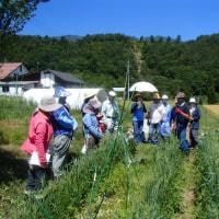自然菜園スクール/実践コース