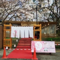 さくら桟敷(桜まつり2017)