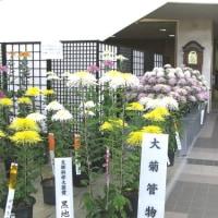 菊 まつり Ⅱ