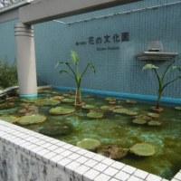 花の文化園さんに行ってきました。。