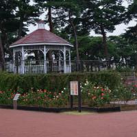 前橋 敷島公園の秋バラ2016