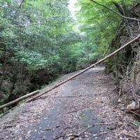 林道探し パート2