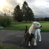 寒くても朝夕ともに犬猫散歩ができた月曜日