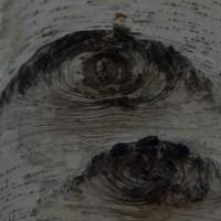樹木が主役の写真ー22