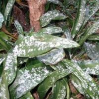 初雪と初氷