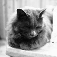 困った猫だね~。