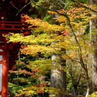 高野山の紅葉は色づき始めでした