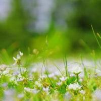 公園の白い花
