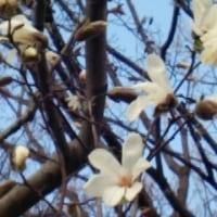 代々木公園にも春が来た