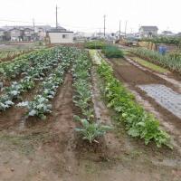 秋の家庭菜園