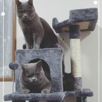 ブリとボブとネコタワー。