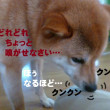 2017 7/23★今日はたろう君と桃ちゃん・チャッピー君です^m^
