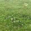 利尻島・礼文島の旅 その二 礼文島をトレッキングして高山植物の花々を満喫