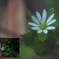 野の小さい花。