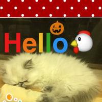 おはよう!ヤドカリ型スリッパ発見?ペルシャ子猫 2ヶ月児ニャンコ (=^x^=)