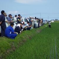 「平成28年度水稲直播栽培現地検討会」が開催されました。