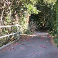 里山の背小道