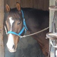 最近の私の馬