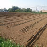 トラクターで耕うん