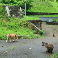 梅雨真っ最中の沖縄の猫たち 2016年5月 その5