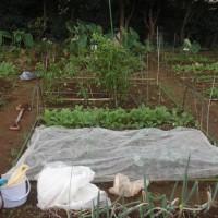夏野菜から秋野菜へ