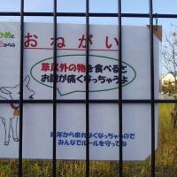 武蔵境 山中南公園前の山羊さん パート1