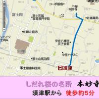 岳南電車公式「本妙寺のしだれ桜」