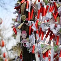 採用作品「新春のおみくじ」