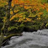 初めての 十和田奥入瀬渓谷への旅