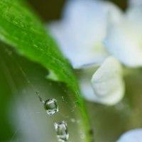 卯の花腐し
