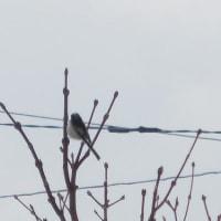 庭で小鳥が