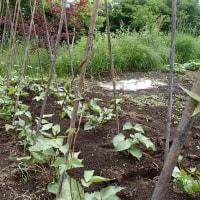 ジャガイモの防除